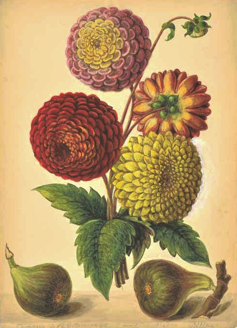 Newly discovered botanical watercolours at LAPADA