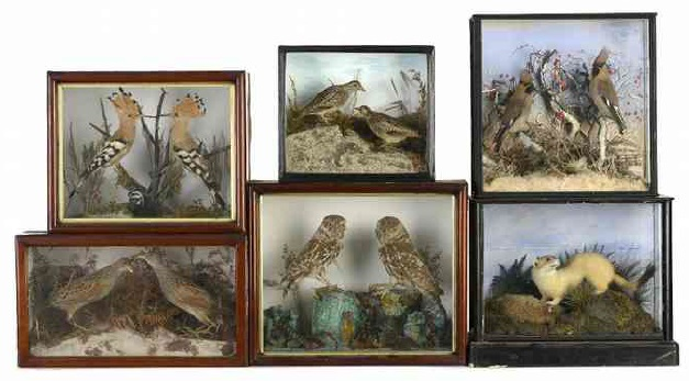 taxidermy cases