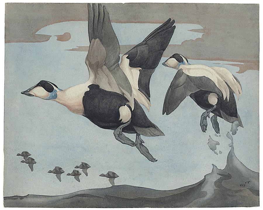 Richard Barrett Talbot Kelly (1896-1971), Eider in Flight