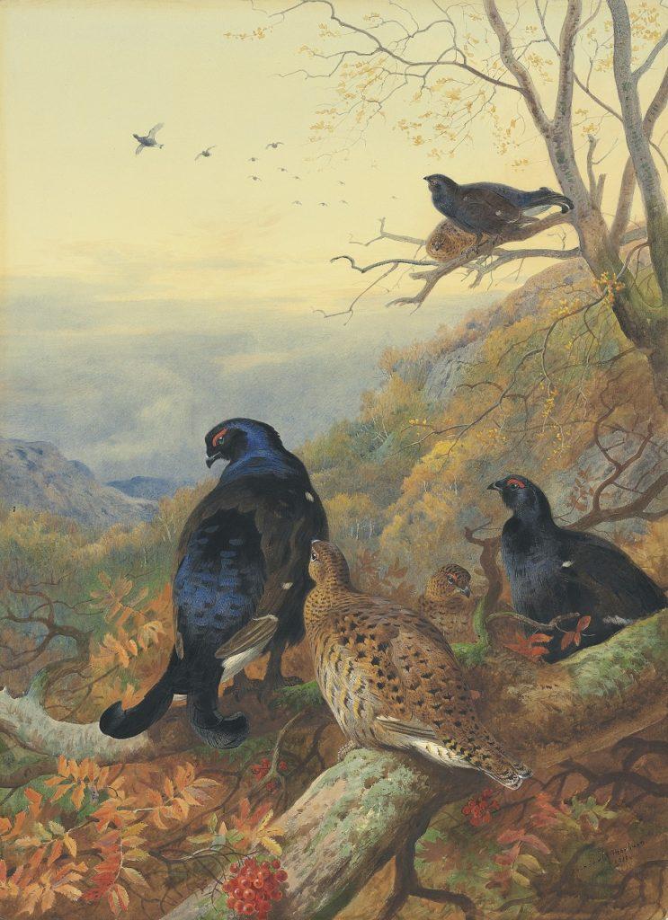 Archibald Thorburn Blackgame in the glen