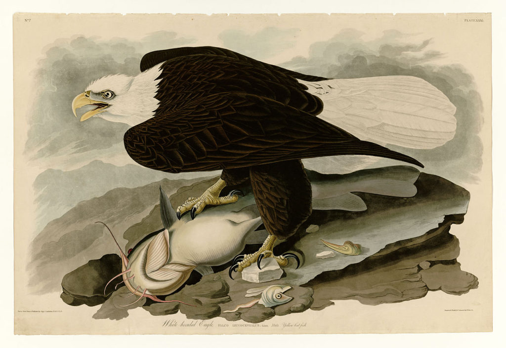 The Birds of America rare book